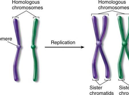 Cromosomi e cromatidi