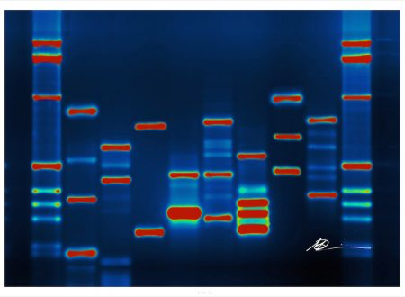 Impronta genetica