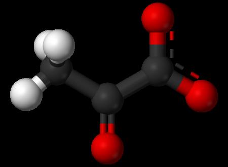 Destino metabolico del Piruvato